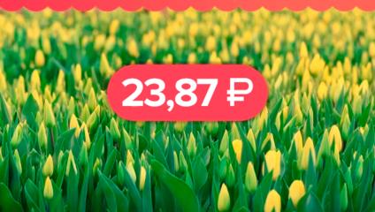 Тюльпаны от 23,87 ₽ Готовимся к 8 марта заранее!
