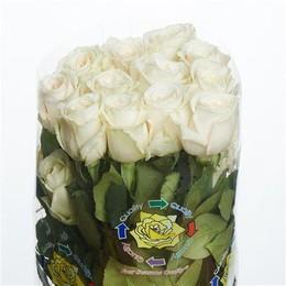 Rose Playa Blanca (Роза Плая Бланка) B50 Royal Flowers