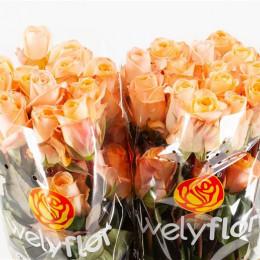 Rose Tiffany! (Роза Тиффани!) B40 Royal Flowers
