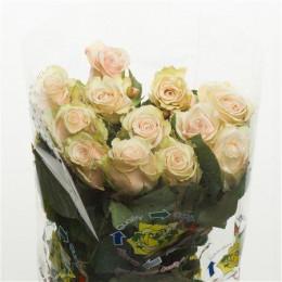 Rosa Sahara (Роза Сахара) В50
