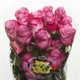 Rose Moody Blues (Роза Муди Блу) B60 Royal Flowers