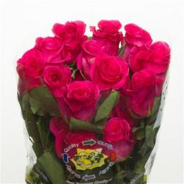 Rose Pink Floyd (Роза Пинк Флойд) В50 Royal Flowers