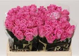 Rosa Gr Aqua (Роза Гр Аква) В40 (Цветы Удмуртии)