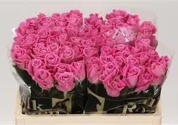 Rosa Gr Aqua (Роза Гр Аква) В50(Цветы Удмуртии)