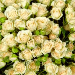 Rosa Spray Vanilla  Buket (Роза Спрей Ванила Букет) B60