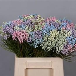 Bouquet Lanuginosa Pastel Xlarge (Букет Ланугиноса Пастель Лардж)В40