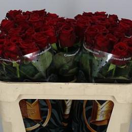 Rosa Gr Red Naomi(Роза Гр Ред Наоми) В30