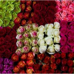 Rose mix Colors red( Роза Микс ) В40
