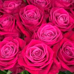 Роза Космик  (Цветы Удмуртии)В60