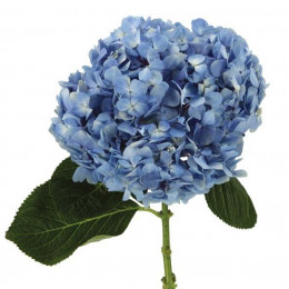 Hydrangea Select blue (Гортензия Селект Блу) В60
