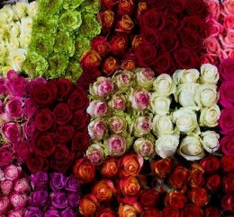 Rosa Mix (Роза Микс) В40 Eden Roses