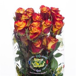Rosa High Magic (Роза Хай Меджик) B60 Hayat Roses